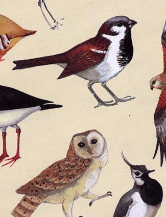 Bird-paper!