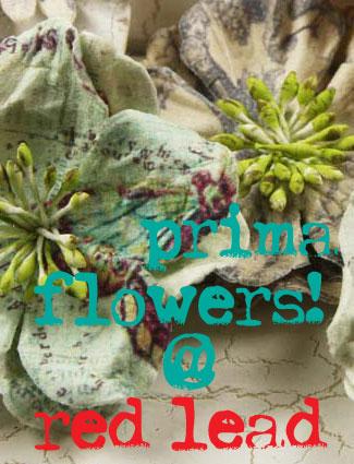 Primaflowers!!