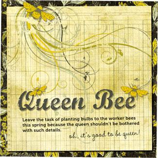 Pink-Paislee-Queen-Bee!