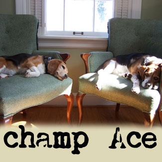 Ace-and-champ-relaxing!