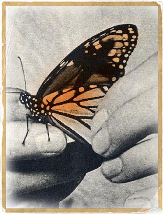 Gentle-Butterfly!