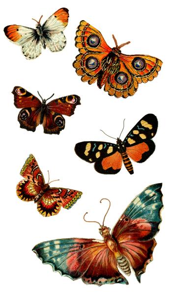 Butterfly-Art!
