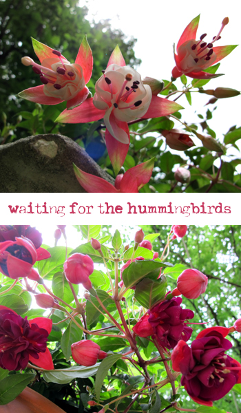 Waiting-4-Hummers
