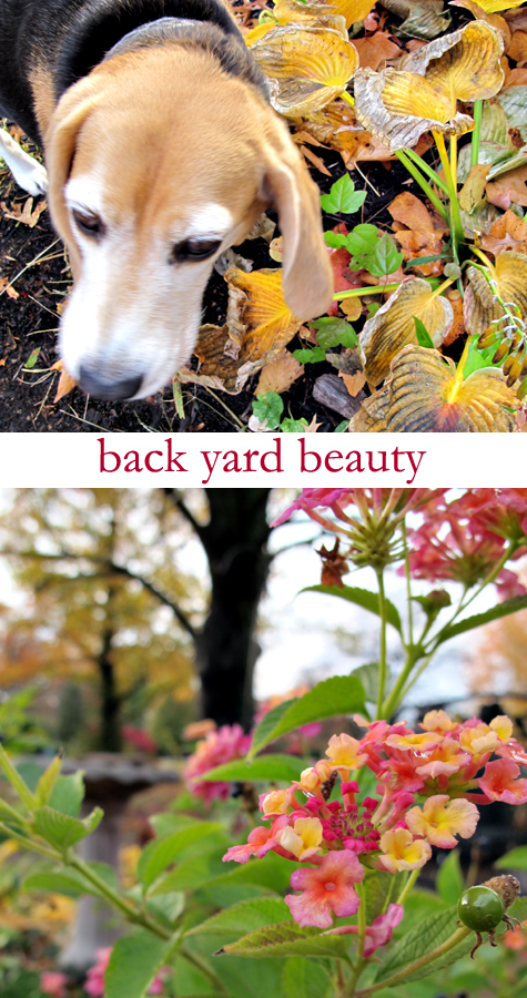 Backyard-beauty!