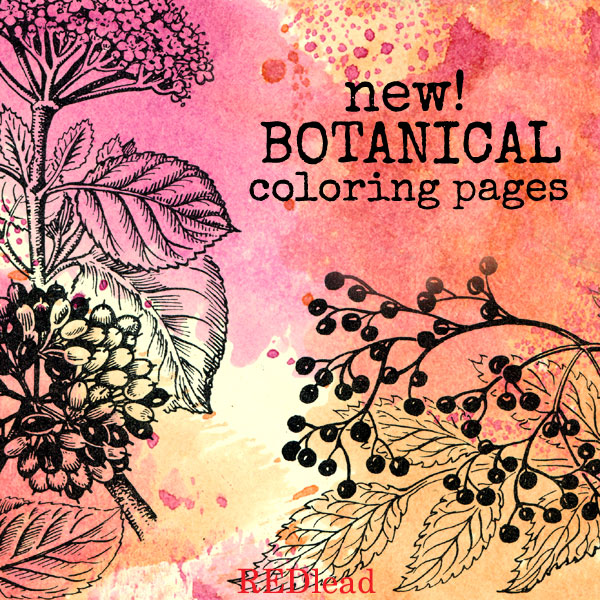New-botanical-coloring-page