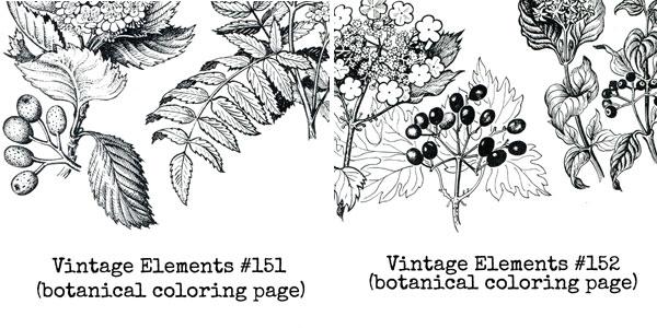 Vintage-botanicals