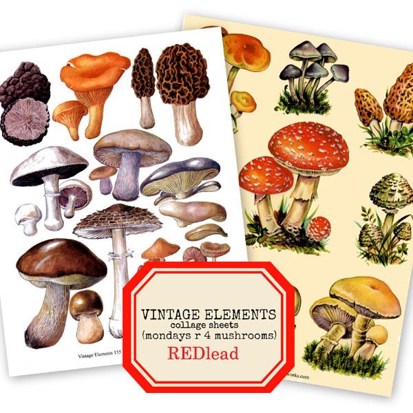 Mondays-are-4-mushrooms